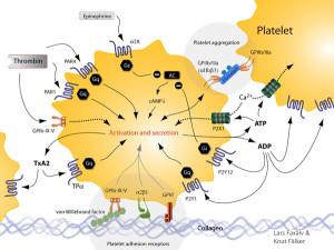 Figur 1 Platelets