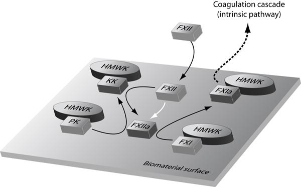 Figur 3 biomaterial intrinsic pathway